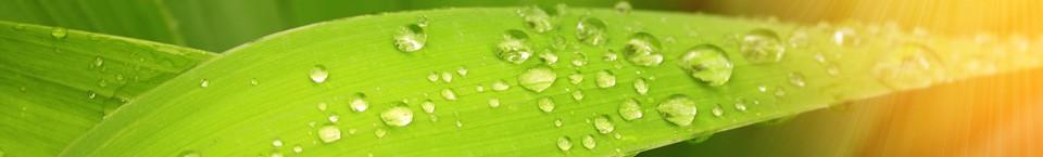 Nottingham Homeopathy & Reiki Healing